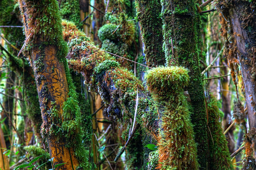 hawaii bamboo bigisland akakafallsstatepark
