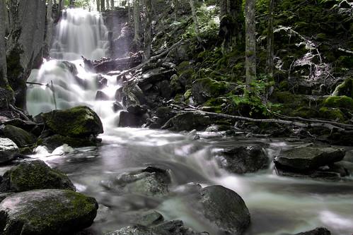 wood longexposure light summer tree water waterfall spring silverfallen