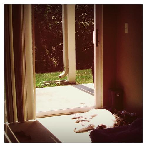 riley-soaking-up-sun