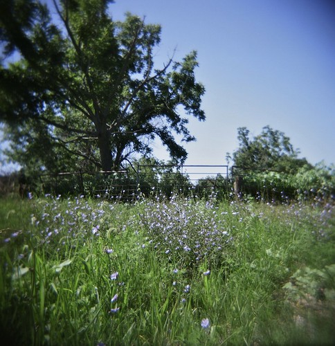 blue trees summer 120 film st analog fence mediumformat square landscape purple ditch toycamera lavender august plastic wildflowers roadside holga120cfn 2011 130th southwestiowa colornegativefilm fujipro160ns roadtrip2011 taylorcountyiowa countyhighwayj20 bushvilleiowa