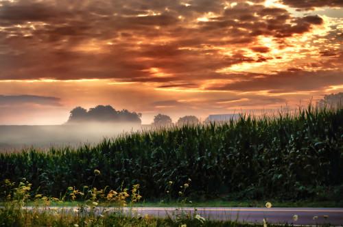 [フリー画像素材] 自然風景, 朝焼け・夕焼け, 田園・農場, 霧・霞 ID:201207301200