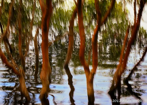 ICM: Mangroves by andiwolfe (I'm back!)