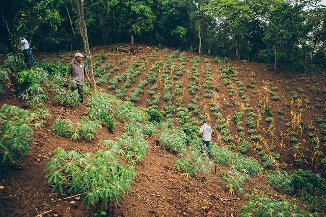 Dominican Republic hillside farming