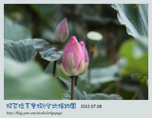 台北植物園5