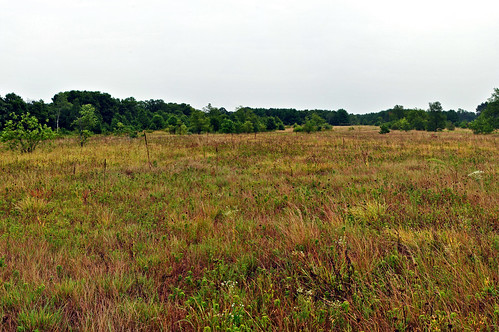 Buffalo River Trail Prairies State Natural Area