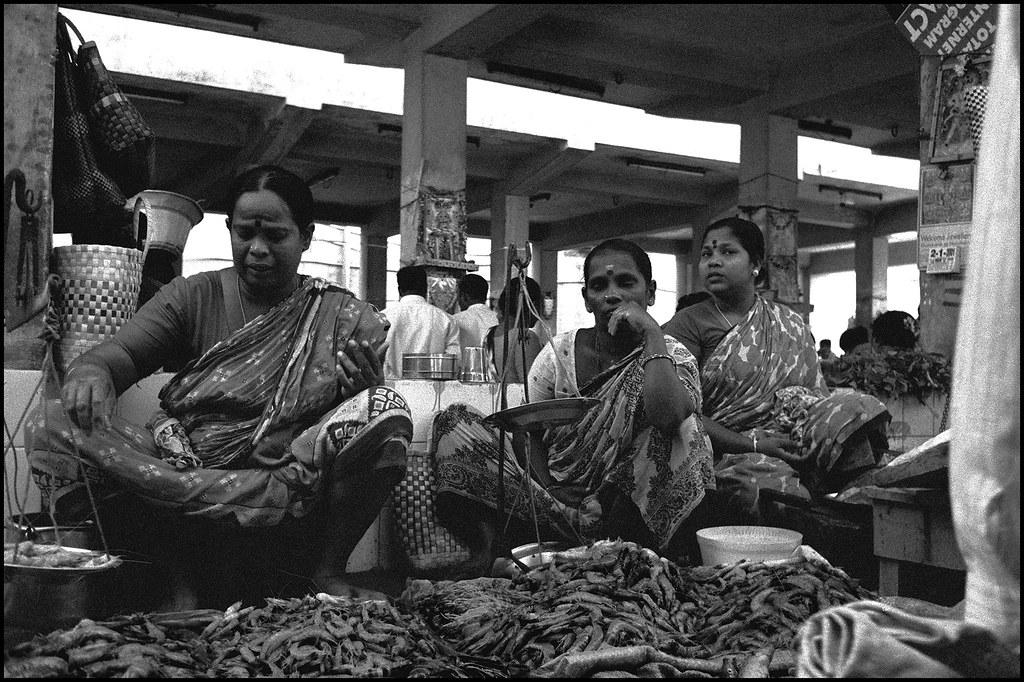 Elevation of puducherry india maplogs for Cherry street fish market