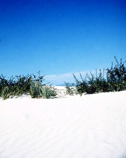 New Mexico   -   White Sands National Monument   -   July 1972