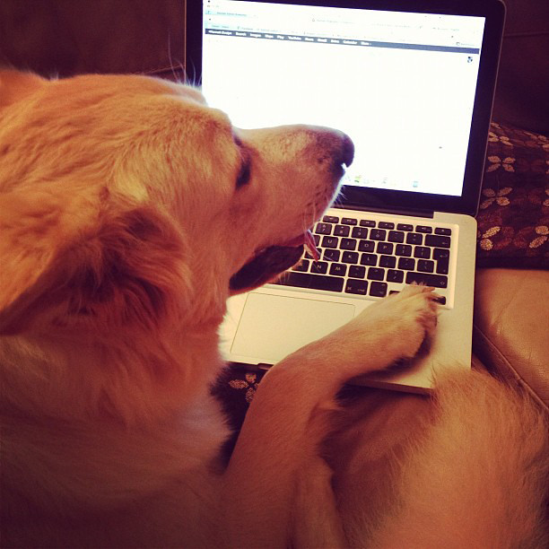 Poz helping with my emails