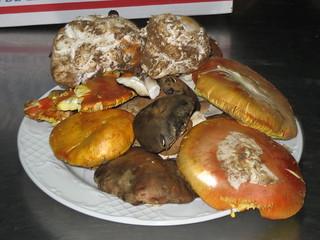 La Sierra Norte alberga una gran riqueza micológica.