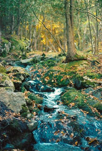 autumn sun fall leaves pentax kodak mountpleasant newbrunswick flare portra maritimes saintjohn rockwood rockwoodpark