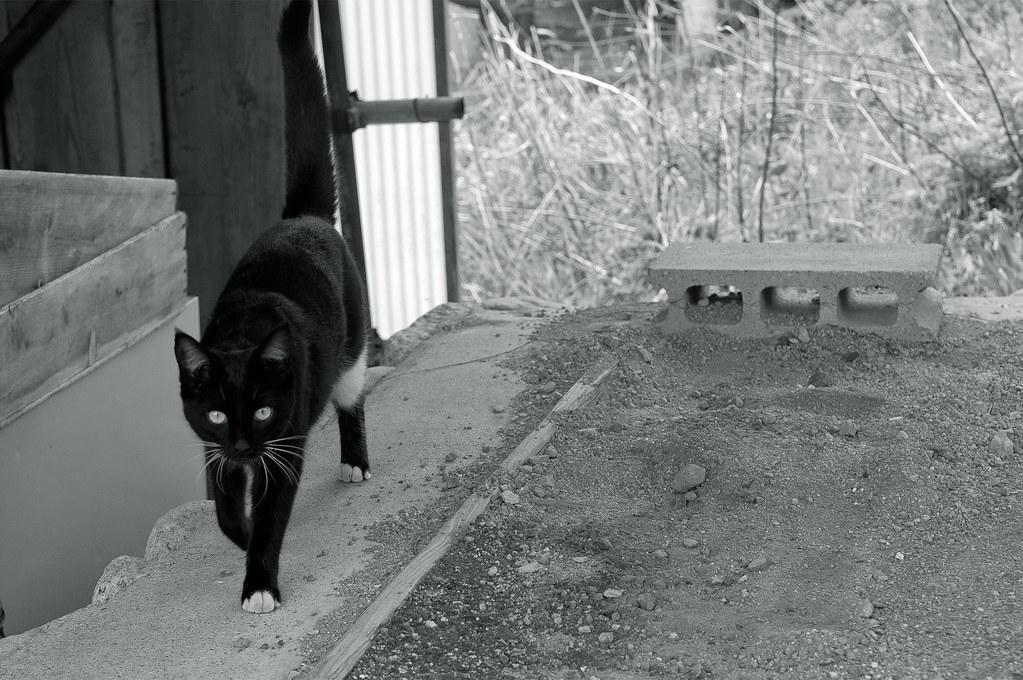 a cat|三重県菰野町
