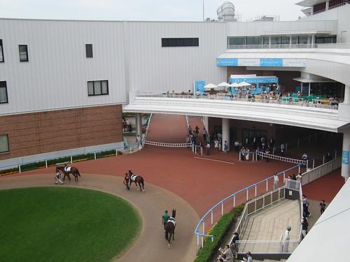 函館競馬場の光の広場から見た2階テラス
