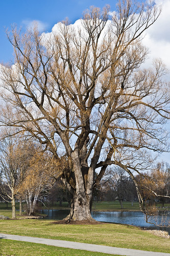 tree landscape nikon taylorlake 50mm18 d40 colgateuniversity
