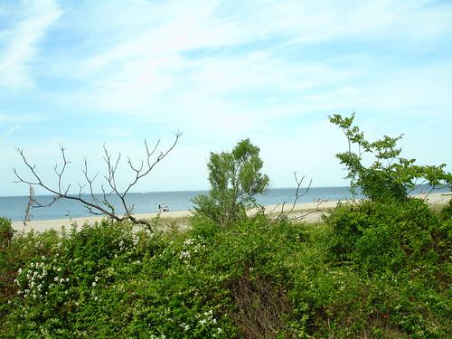 Elm's Beach Park, Lexington Park