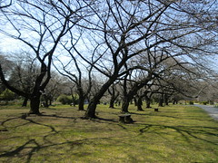 20120328小石川植物園-014