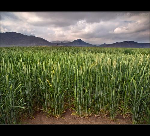 field clouds landscape spring corn farm lakeview inlandempire sanjacintowildlifearea