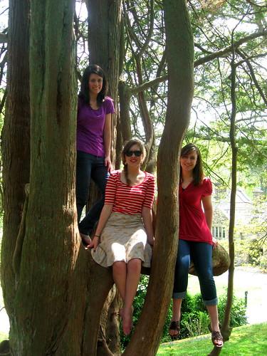 RCSP Tree