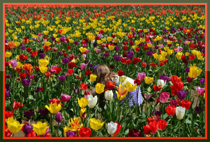 tulips_little_girl_glossy_frame