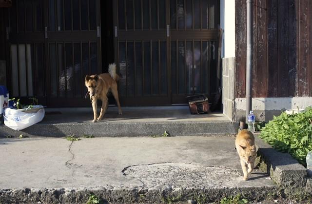 今日の犬の散歩