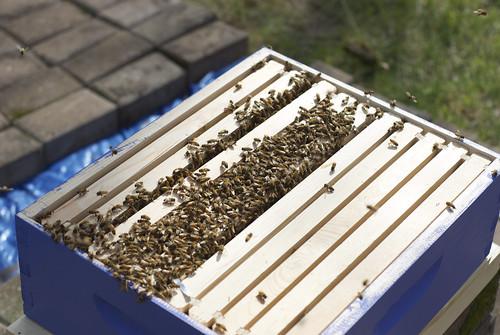Full hive