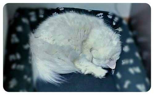 #White #cat #sleeping in #cold #weather