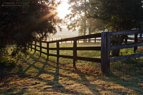 morning mist green sunrise fence ncfarm