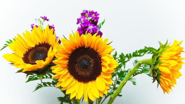 (25/52) Flower Power