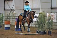 animal sports, equestrianism, western riding, mare, stallion, equestrian sport, sports, western pleasure, equitation, reining, horse, jockey, barrel racing,