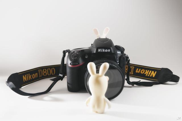 D800 : Une photo de lapin crétin sur 36 300 000 pixels ça le fait ?