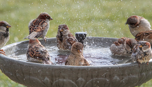 Splish Splash ~ Having a Pool Party ~ Everyone is Invited!