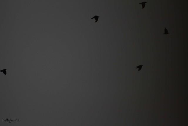 prettygreentea birds
