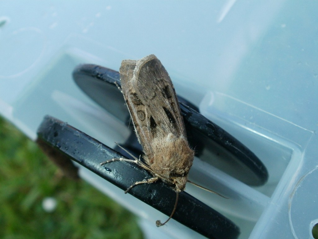 Moths on Wheels!, by SamuelMillar153 on Flickr