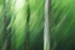 [フリー画像素材] 自然風景, 森林, 樹木, 緑色・グリーン ID:201207280600
