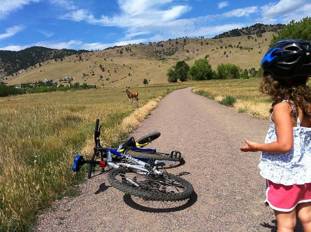 Deer - Biking at Wonderland Lake, Boulder, CO