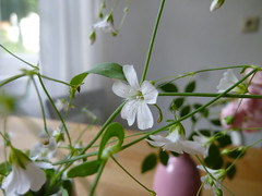 Growing wild this white one
