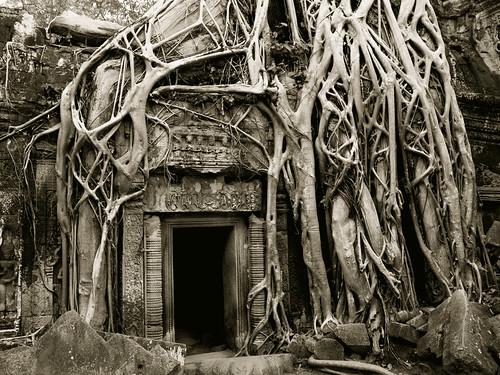 Forgotten Doorway PLATINUM
