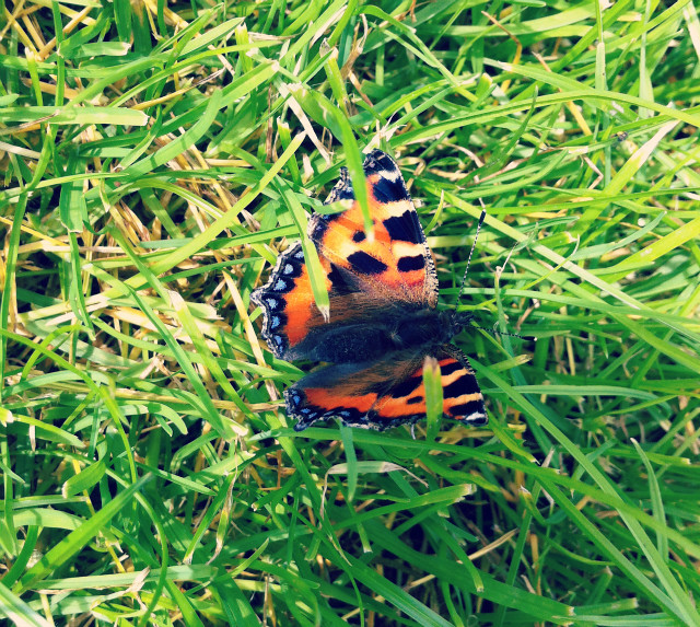 17 butterfly nature uk lifestyle blog
