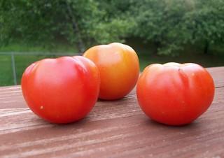 Tomatoes_70612