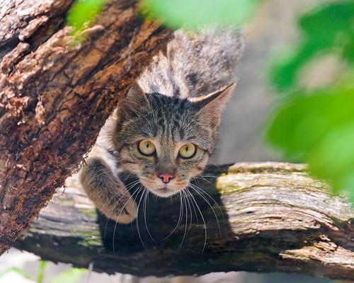 [フリー画像素材] 動物 1, 猫・ネコ ID:201208111000