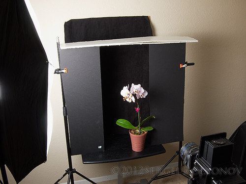 3 views of Orchid - setup 1