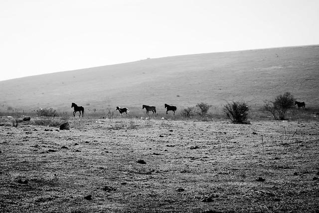 Crimean horses