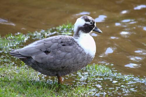 Mmm. A duck!