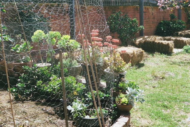 Schoolhouse Studio Gardens - Melbourne
