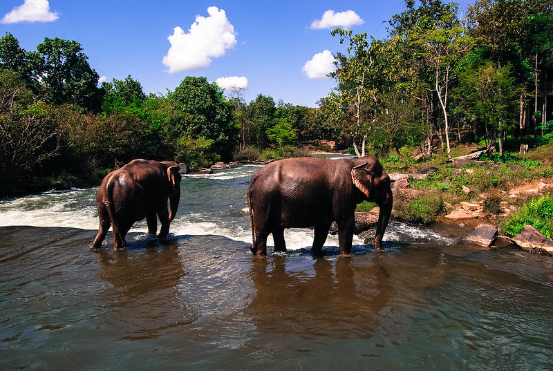 Tat Lo elephants, Laos