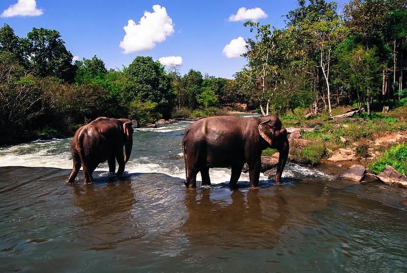 Tat Lo elephants, Laos