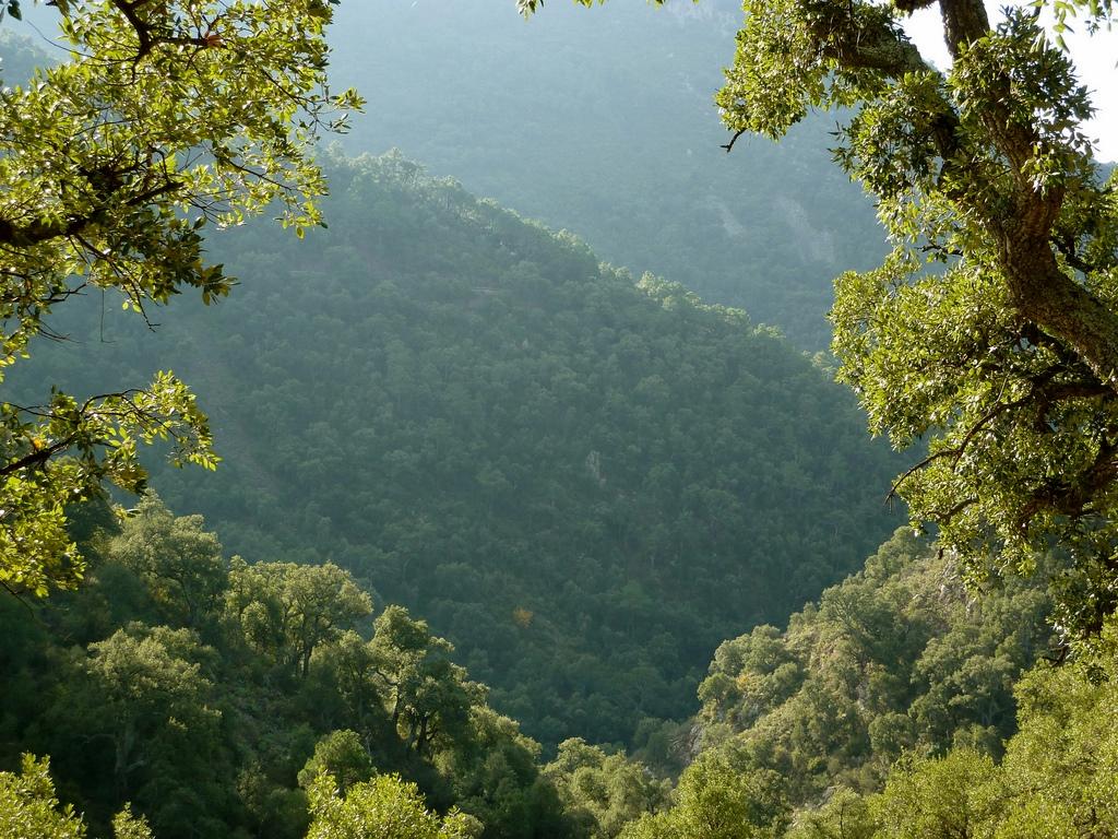 Bosque de alcornoques en la de Sierra Espadán. Autor, Manel
