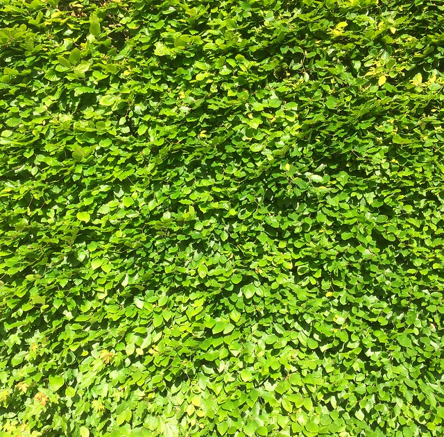 Living Wall - Free For Commercial Use - FFCU