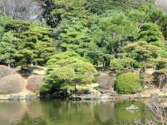 20120328小石川植物園-116