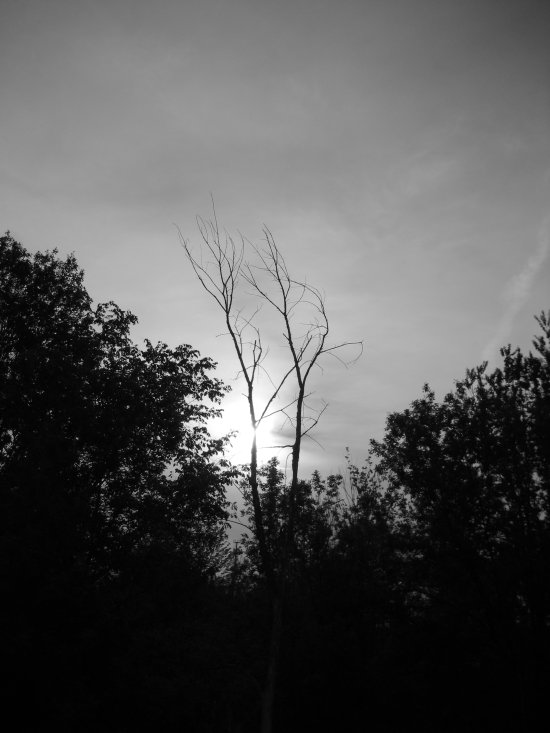 [a tree silhouetting the sun]