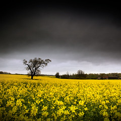 Gloomy Day for a Walk by Ian A Robertson